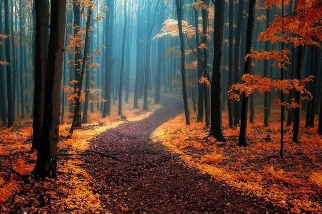 Những khu rừng đẹp đến khó tin là có thật - Ảnh 1.