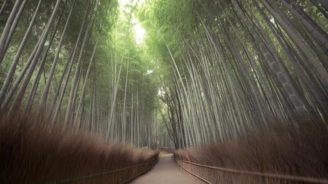 Những khu rừng đẹp đến khó tin là có thật - Ảnh 10.