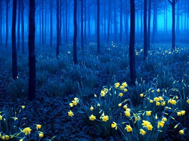 Những khu rừng đẹp đến khó tin là có thật - Ảnh 11.