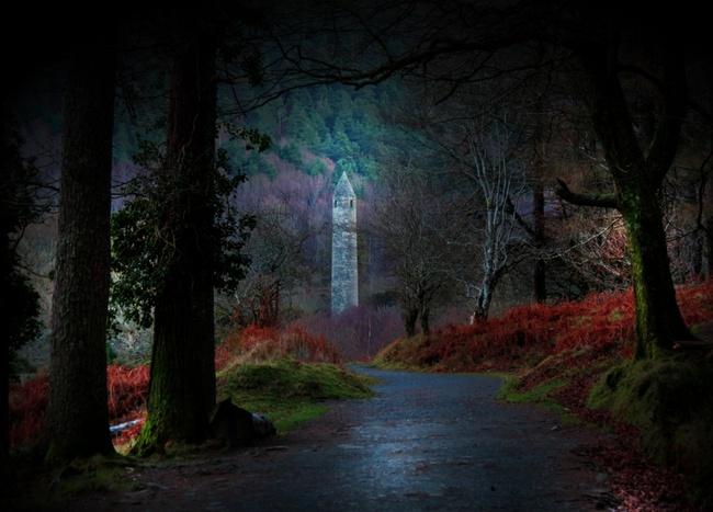 Những khu rừng đẹp đến khó tin là có thật - Ảnh 12.