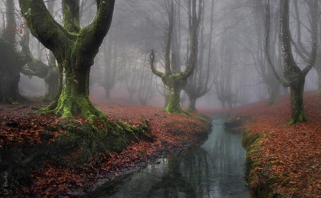 Những khu rừng đẹp đến khó tin là có thật - Ảnh 13.
