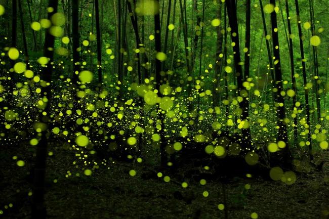 Những khu rừng đẹp đến khó tin là có thật - Ảnh 14.