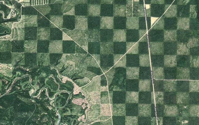 Khu rừng kỳ lạ nhìn từ trên cao trông giống hệt một bàn cờ với các ô vuông đều tăm tắp - Ảnh 1.
