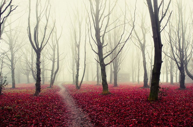 Những khu rừng đẹp đến khó tin là có thật - Ảnh 15.
