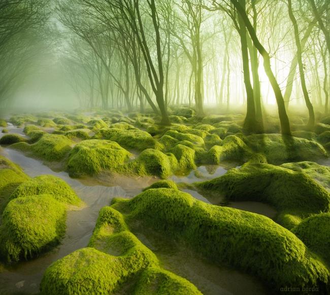 Những khu rừng đẹp đến khó tin là có thật - Ảnh 2.