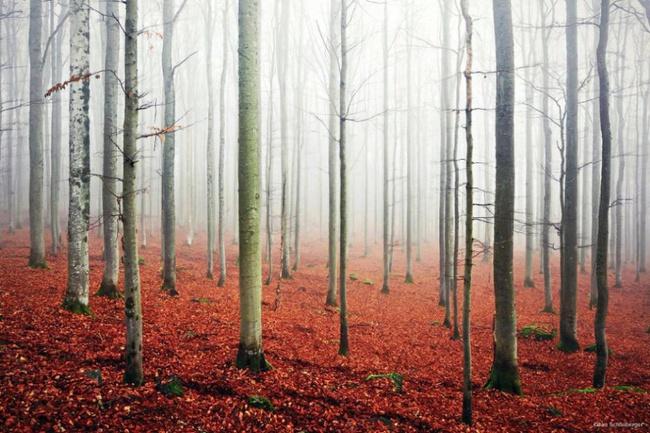 Những khu rừng đẹp đến khó tin là có thật - Ảnh 3.