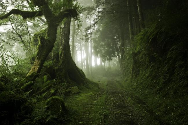 Những khu rừng đẹp đến khó tin là có thật - Ảnh 4.