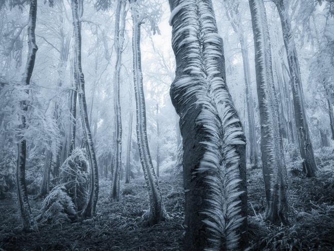 Những khu rừng đẹp đến khó tin là có thật - Ảnh 5.