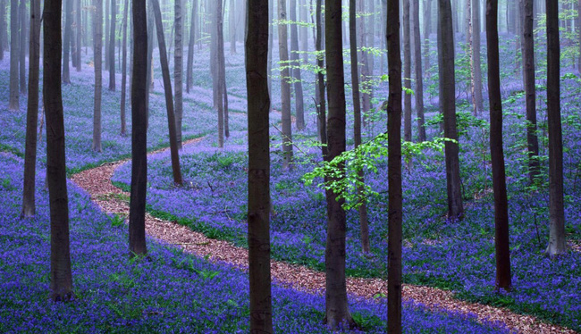 Những khu rừng đẹp đến khó tin là có thật - Ảnh 6.