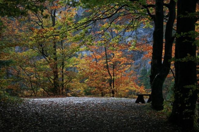 Những khu rừng đẹp đến khó tin là có thật - Ảnh 7.