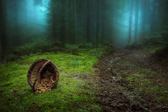 Những khu rừng đẹp đến khó tin là có thật - Ảnh 8.