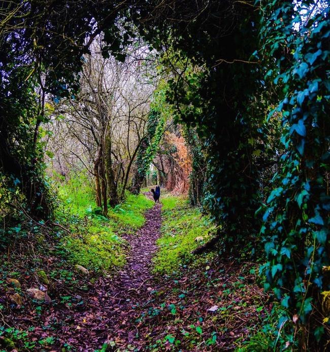 Những khu rừng đẹp đến khó tin là có thật - Ảnh 9.