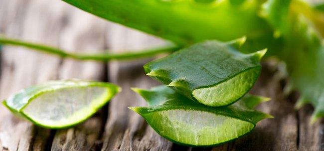 Đừng nghĩ lô hội chỉ để bôi da, loại cây này còn giúp trị dứt điểm vô vàn bệnh mà bạn không hay biết - Ảnh 1.