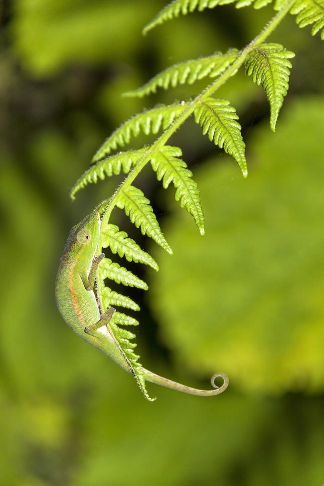 Những màn ngụy trang kinh điển của động vật khiến người tinh mắt cũng phải chào thua - Ảnh 12.