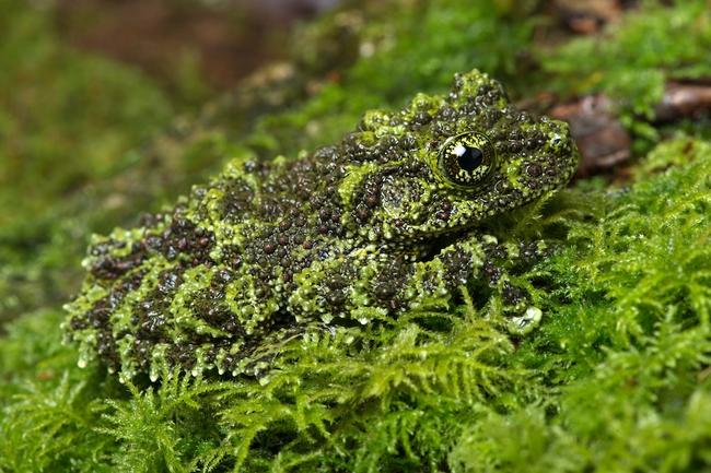 Những màn ngụy trang kinh điển của động vật khiến người tinh mắt cũng phải chào thua - Ảnh 2.