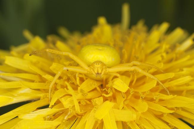 Những màn ngụy trang kinh điển của động vật khiến người tinh mắt cũng phải chào thua - Ảnh 4.