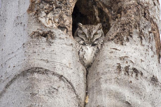Những màn ngụy trang kinh điển của động vật khiến người tinh mắt cũng phải chào thua - Ảnh 8.