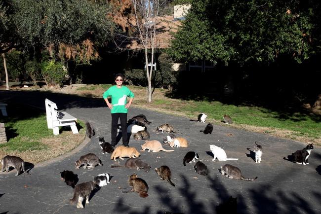 Người phụ nữ nhận hơn 1.000 con mèo về làm thú cưng - Ảnh 12.