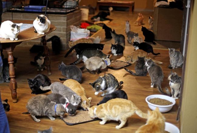 Người phụ nữ nhận hơn 1.000 con mèo về làm thú cưng - Ảnh 11.