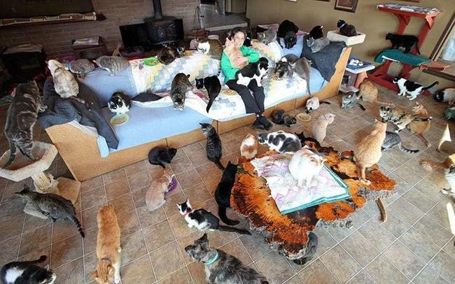 Người phụ nữ nhận hơn 1.000 con mèo về làm thú cưng - Ảnh 10.