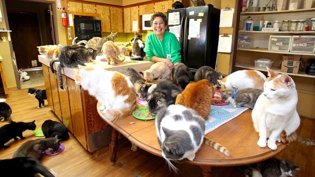 Người phụ nữ nhận hơn 1.000 con mèo về làm thú cưng - Ảnh 1.