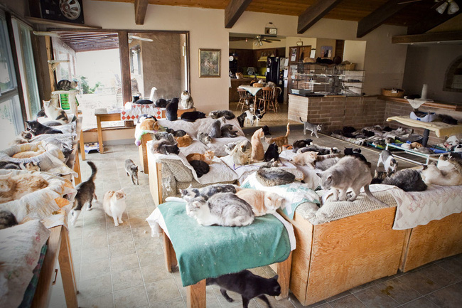 Người phụ nữ nhận hơn 1.000 con mèo về làm thú cưng - Ảnh 6.