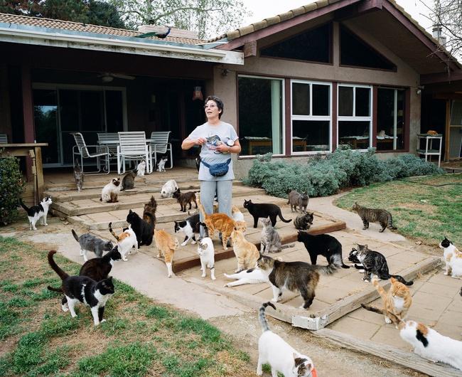 Người phụ nữ nhận hơn 1.000 con mèo về làm thú cưng - Ảnh 5.