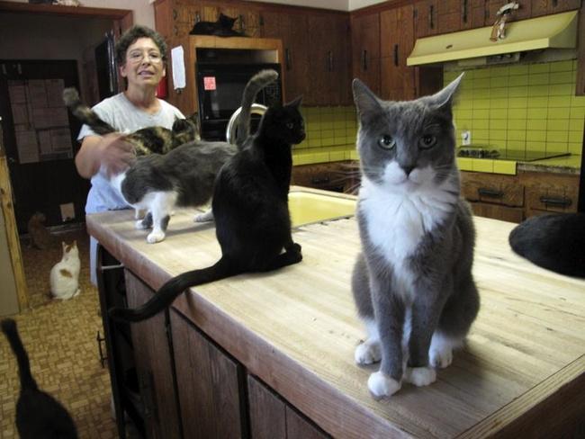 Người phụ nữ nhận hơn 1.000 con mèo về làm thú cưng - Ảnh 3.