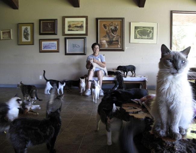 Người phụ nữ nhận hơn 1.000 con mèo về làm thú cưng - Ảnh 8.