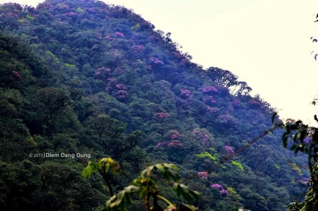 Vượt suối, băng rừng chinh phục Putaleng mùa núi nở hoa - Ảnh 1.