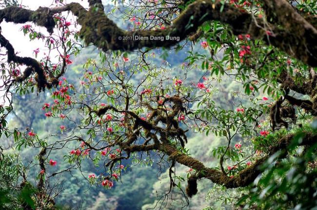 Vượt suối, băng rừng chinh phục Putaleng mùa núi nở hoa - Ảnh 3.