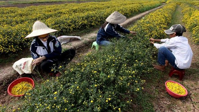 Nữ sinh nườm nượp rủ nhau kiếm tiền trên cánh đồng đẹp như mơ - Ảnh 3.