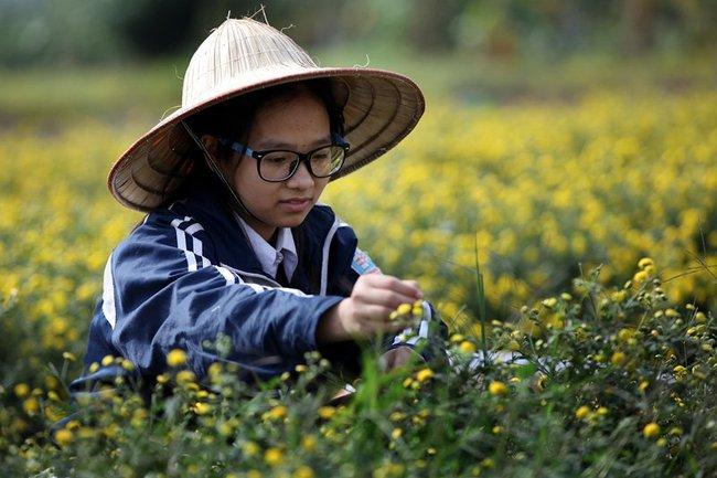 Nữ sinh nườm nượp rủ nhau kiếm tiền trên cánh đồng đẹp như mơ - Ảnh 4.
