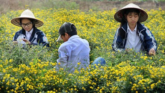Nữ sinh nườm nượp rủ nhau kiếm tiền trên cánh đồng đẹp như mơ - Ảnh 5.