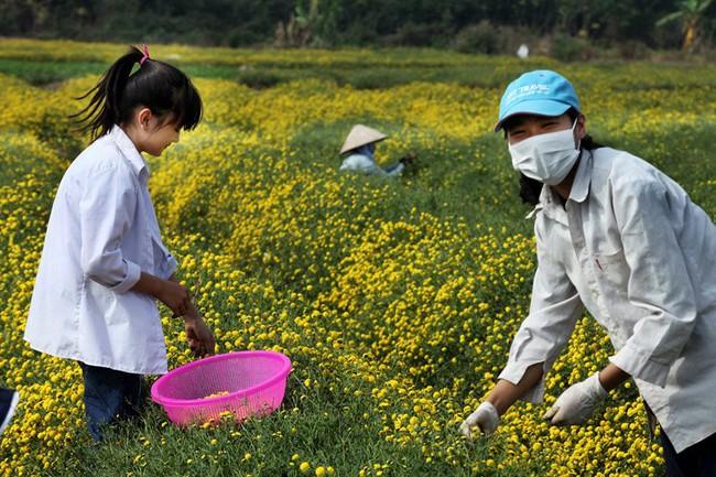 Nữ sinh nườm nượp rủ nhau kiếm tiền trên cánh đồng đẹp như mơ - Ảnh 6.