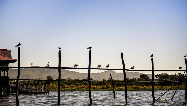 Cuộc sống yên bình trên hồ Inle - Ảnh 8.