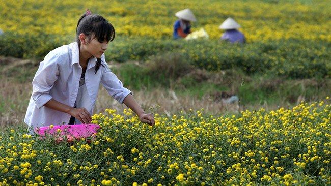 Nữ sinh nườm nượp rủ nhau kiếm tiền trên cánh đồng đẹp như mơ - Ảnh 8.