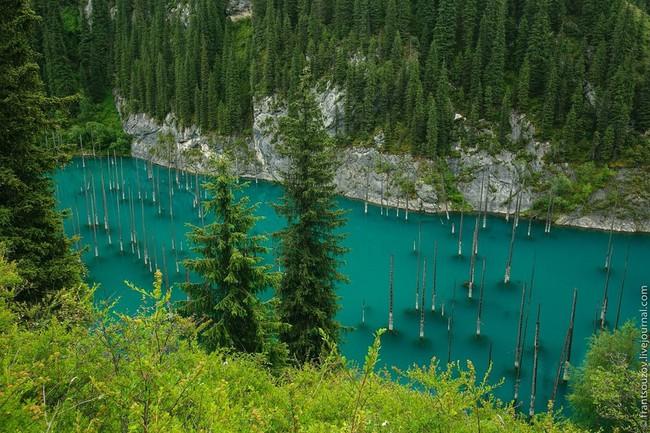 Những khu rừng xanh mướt đẹp tựa thiên đường