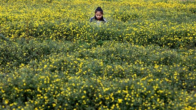 Nữ sinh nườm nượp rủ nhau kiếm tiền trên cánh đồng đẹp như mơ - Ảnh 9.