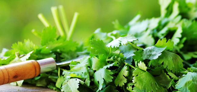 Loại rau gia vị rẻ tiền này có thể chữa được bách bệnh được chuyên gia Đông y công nhận - Ảnh 4.