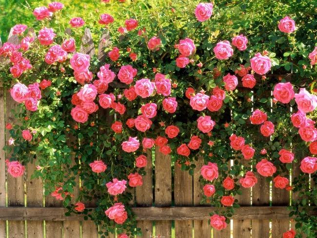 4 ý tưởng trang trí sân vườn bằng các loài hoa cho mùa hè rực rỡ - Ảnh 2.