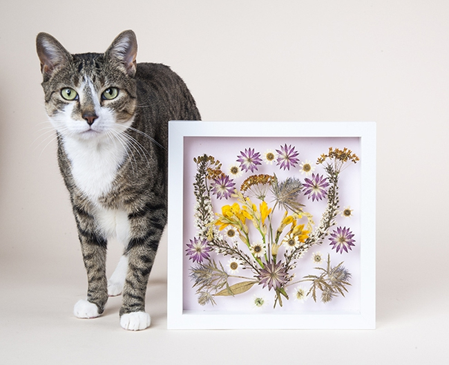 Nhà bạn sẽ ấn tượng hơn với bức tranh hoa khô tự làm - Ảnh 7.