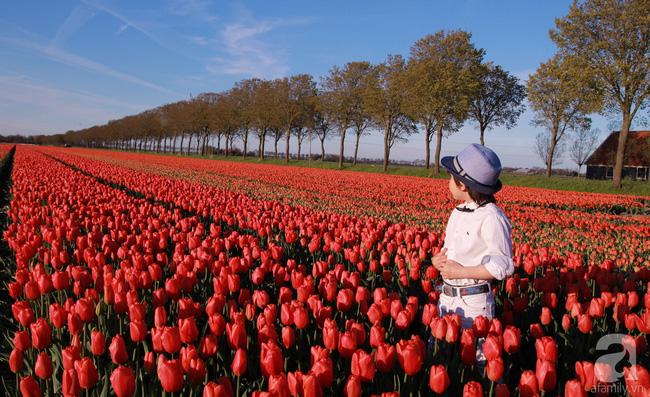 Vẻ đẹp cuốn hút của hoàng tử lai mang 2 dòng máu Việt – Hà Lan - Ảnh 21.