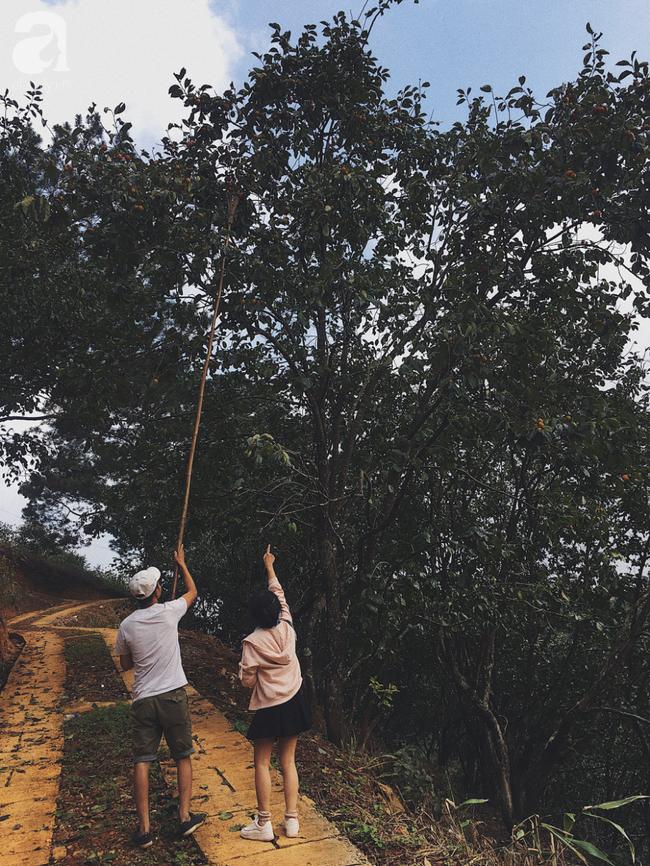 Đến Đà Lạt tháng 10, đừng quên trải nghiệm vào vườn tự tay hái hồng giòn  - Ảnh 2.