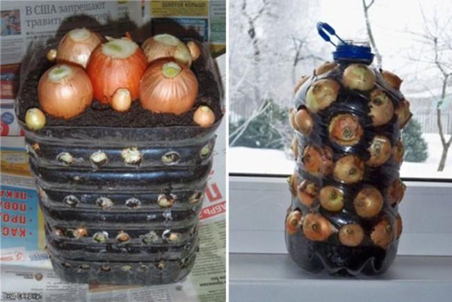 Cách trồng siêu dễ cho 6 loại cây gia vị không thể thiếu trong bữa cơm gia đình Việt - Ảnh 3.