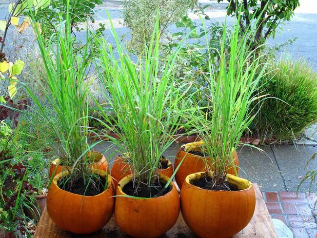 Cách trồng siêu dễ cho 6 loại cây gia vị không thể thiếu trong bữa cơm gia đình Việt - Ảnh 14.
