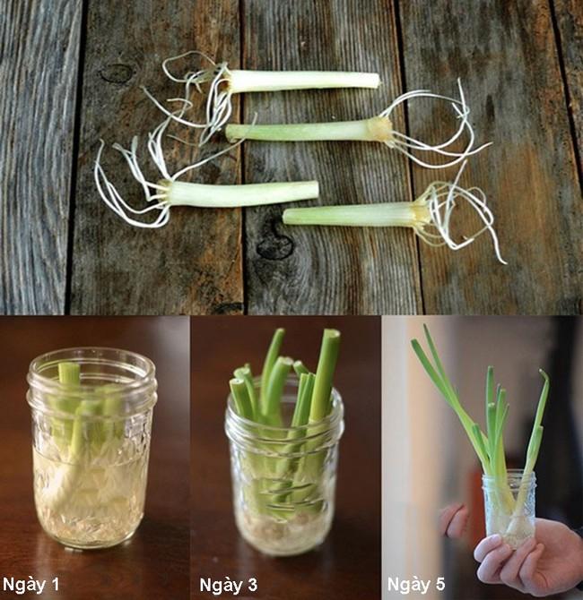Cách trồng siêu dễ cho 6 loại cây gia vị không thể thiếu trong bữa cơm gia đình Việt - Ảnh 5.