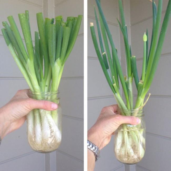 Cách trồng siêu dễ cho 6 loại cây gia vị không thể thiếu trong bữa cơm gia đình Việt - Ảnh 6.