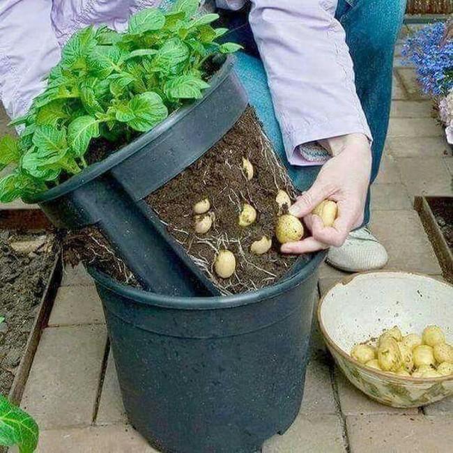 Mách bạn cách trồng rau xanh ngay trong nhà phố mà vẫn đảm bảo chất lượng và số lượng - Ảnh 10.