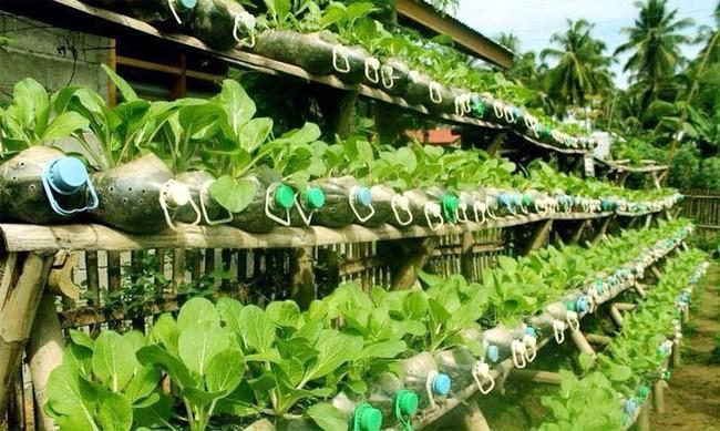 Mách bạn cách trồng rau xanh ngay trong nhà phố mà vẫn đảm bảo chất lượng và số lượng - Ảnh 2.